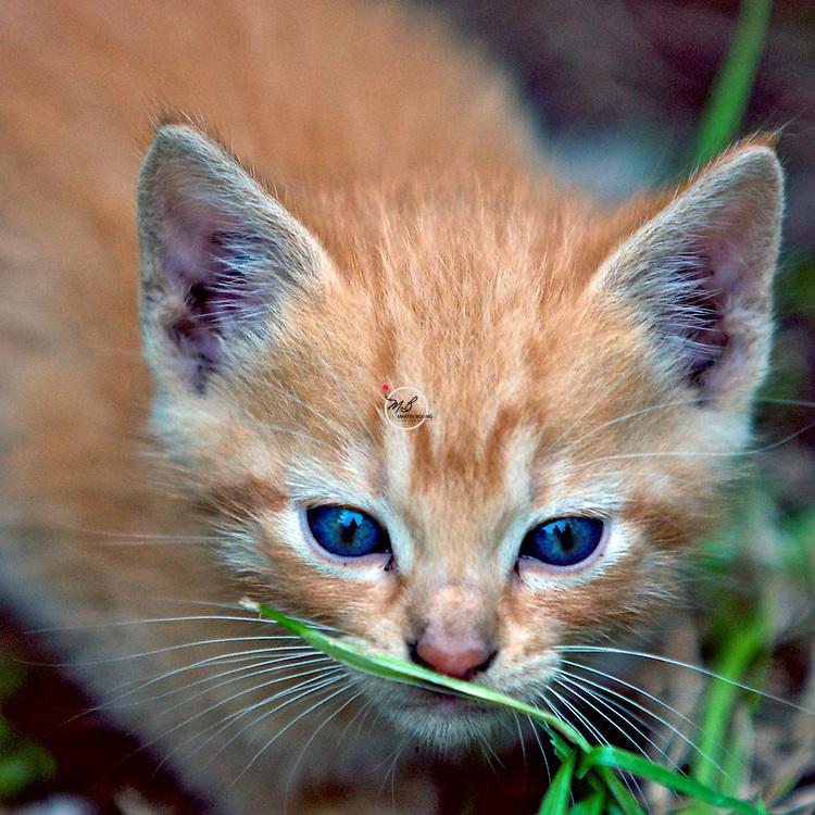 Kitten Tabby Grass