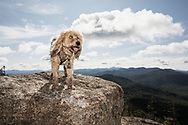 Fluffy, dirty dog on Ampersand Mountain in the Adirondack Park
