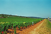 The le Montrachet vineyard in Chassagne and Puligny Montrachet, Bourgogne