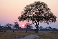 Landscape of the African savanna, orange sun and pink sky, Zimbabwe, Africa. Nature photography wall art. Fine art photography prints.