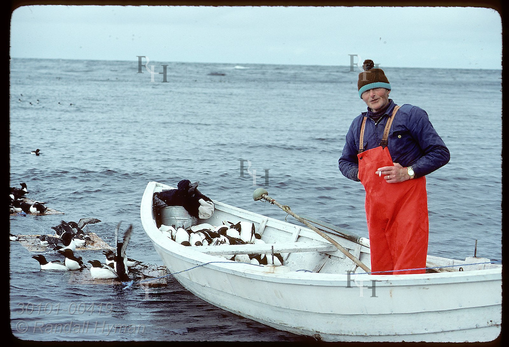 Grimsey Islander stands in rowboat beside illegal floating traps for capturing razorbills in May. Iceland