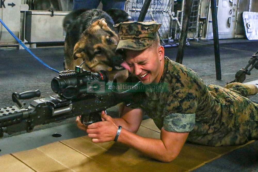 A puppy with the Seeing Eye Dog Puppy Raising Program shows his affection for a Marine aboard USS Kearsarge (LHD-3), May 25, 2017. U.S. Marines and Sailors displayed various weapons systems, ground and aviation vehicles for the local New York community to visit and learn about the Navy-Marine Corps team during Fleet Week New York, May 24-29. (U.S. Marine Corps photo by Sgt. Olivia McDonald)