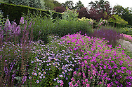Salvia x sylvestris 'Dear Anja', Kalimeris 'Antonia' and Geranium 'Patricia' in a herbaceous border at Newby Hall, Ripon, Yorkshire, UK