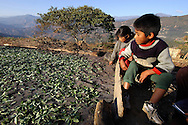 The sun of Yungas will dry naturally the coca leaves job, work, agriculture, landscape