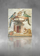 Roman mosaic of drinking birds from Santa Maria Capua Vetere, ancient Capua, inv no 9992, Naples Archaeological Musum, Italy .<br /> <br /> If you prefer to buy from our ALAMY PHOTO LIBRARY  Collection visit : https://www.alamy.com/portfolio/paul-williams-funkystock/roman-mosaic.html - Type -   Naples    - into the LOWER SEARCH WITHIN GALLERY box. Refine search by adding background colour, place, museum etc<br /> <br /> Visit our ROMAN MOSAIC PHOTO COLLECTIONS for more photos to download  as wall art prints https://funkystock.photoshelter.com/gallery-collection/Roman-Mosaics-Art-Pictures-Images/C0000LcfNel7FpLI