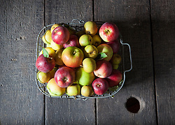 Basket of apples at Aspall's Cider