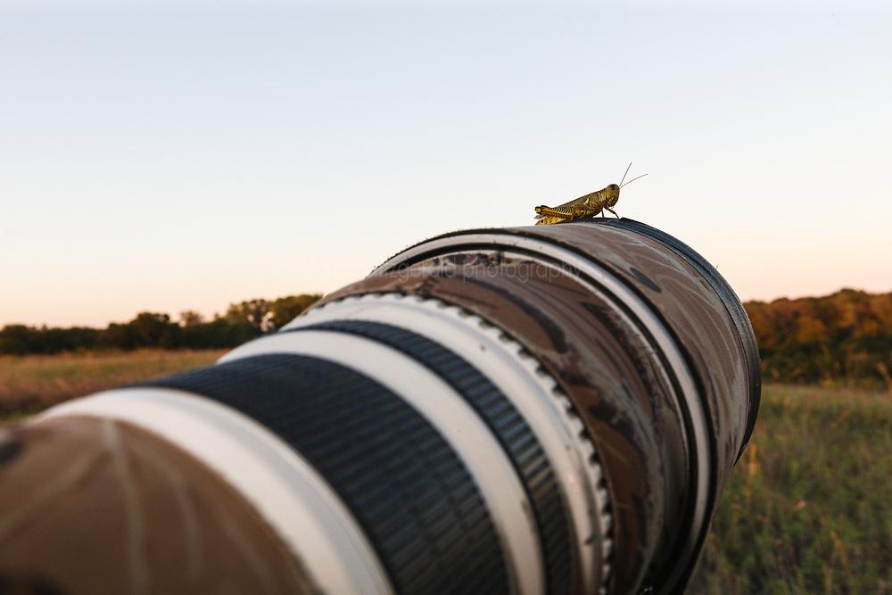 Grasshopper on telephoto lens, Trinity River Audubon Center, Dallas, Texas, USA.