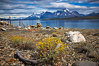 Wildflowers and Feather along a Lake in Patagonia. On the road to Paine National Park from Estancia Lazo. Image taken with a Nikon D3x camera and 28-120 mm f/4 lens (ISO 100, 31 mm, f/16, 1/200 sec).