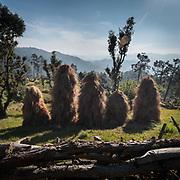 Hay stacks. In the Himalaya.