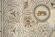 Picture of a Dionysiac Roman mosaics design depicting a lioness and a panther in front of a wine crater, from the ancient Roman city of Thysdrus. 3rd century AD. El Djem Archaeological Museum, El Djem, Tunisia. .<br /> <br /> If you prefer to buy from our ALAMY PHOTO LIBRARY Collection visit : https://www.alamy.com/portfolio/paul-williams-funkystock/roman-mosaic.html . Type - El Djem - into the LOWER SEARCH WITHIN GALLERY box. Refine search by adding background colour, place, museum etc<br /> <br /> Visit our ROMAN MOSAIC PHOTO COLLECTIONS for more photos to download as wall art prints https://funkystock.photoshelter.com/gallery-collection/Roman-Mosaics-Art-Pictures-Images/C0000LcfNel7FpLI