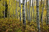 Colorado: Vail