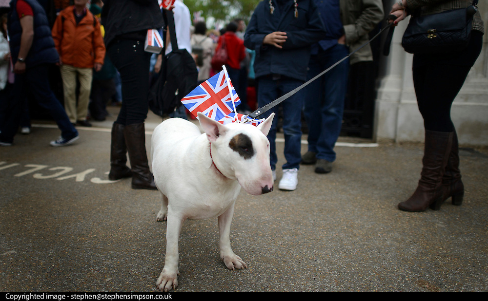 © Licensed to London News Pictures. 05/06/2012. London, UK. Thor the dog. People watch the Jubilee Procession on the Mall today 5th June 2012.  The Royal Jubilee celebrations. Great Britain is celebrating the 60th  anniversary of the countries Monarch HRH Queen Elizabeth II accession to the throne this weekend Photo credit : Stephen Simpson/LNP