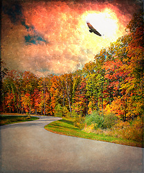 A bird soars past the bright sun on a winding back road drapes by Autumn trees basked in warm sunlight