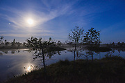 Light night with full-moon, few stars and deep blue sky over raised bog and its bog-pools with slowly rising fog between small scots pines (Pinus sylvestris), Kemeri National Park (Ķemeru Nacionālais parks), Latvia Ⓒ Davis Ulands | davisulands.com