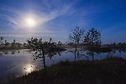 Light night with full-moon, few stars and deep blue sky over raised bog and its bog-pools with slowly rising fog between small scots pines (Pinus sylvestris), Kemeri National Park (Ķemeru Nacionālais parks), Latvia Ⓒ Davis Ulands   davisulands.com