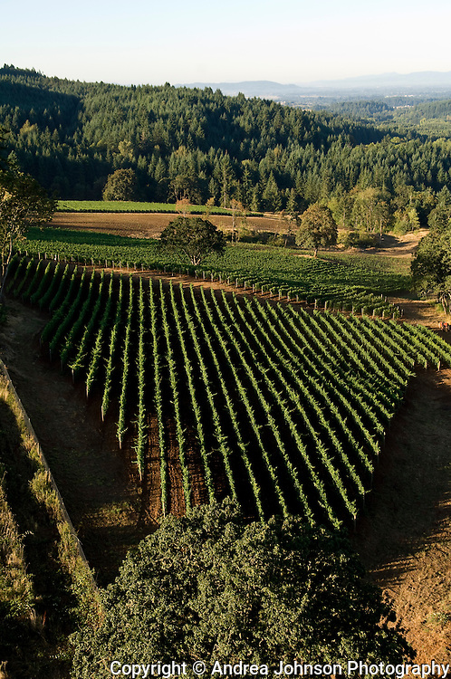 Aerial view over Alexana vineyards, Dundee Hills, Willamette Valley, Oregon