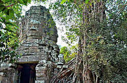 North gate of Banteay Kdei, overgown and surrounded by ancient trees, in the jungle
