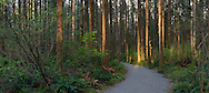 Panorama of the new hiking trail at Campbell Valley Regional Park in Langley, British Columbia, Canada