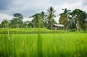 Lost at Last, Bali, Indonesia