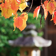 Autumn leaves at Kita no Tenman-gu in Kyoto, Japan