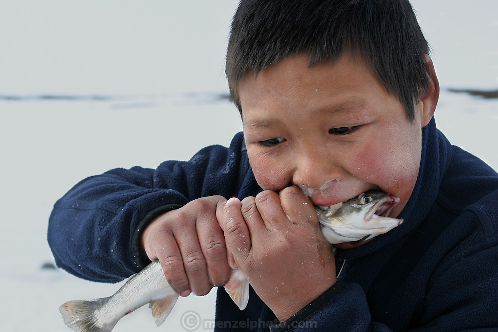 """(MODEL RELEASED IMAGE). Emil and Erika Madsen's nephew Julian bites down on an Arctic char, half in jest, for the camera because the fish is large, but locals say that children often eat small fish raw. It's said to """"tickle their bellies."""" After chopping holes in the ice with a pike, family members lower down hooks baited with seal fat. When the char bite, they yank them out of the hole with a practiced motion. (From a photographic gallery of fish images, in Hungry Planet: What the World Eats, p. 204)."""