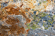 Orange and yellow lichen pattern. Lake of the Hanging Glacier Trail, Purcell Range, Columbia Mountains, British Columbia, Canada.