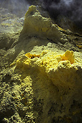 Yellow Sulphur, growing from hot vents along the pathway to the main crater.