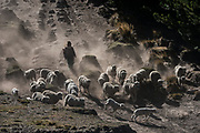 Indian & sheep<br /> Chimborazo Province<br /> Andes<br /> ECUADOR, South America