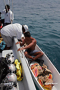Friends of Nature ranger Shayne Pech checks the catch of a conch fisher working in the Gladden Spit & Silk Cayes Marine Reserve, off Placencia, Belize, Central America ( Caribbean Sea ) to be sure all conch are legal size