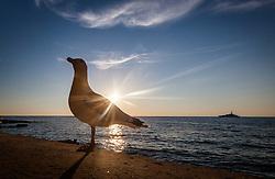 THEMENBILD - URLAUB IN KROATIEN, eine Möwe bei Sonnenuntergang im Gegenlicht, aufgenommen am 03.07.2014 in Porec, Kroatien // a seagull at sunset against the light in Porec, Croatia on 2014/07/03. EXPA Pictures © 2014, PhotoCredit: EXPA/ JFK