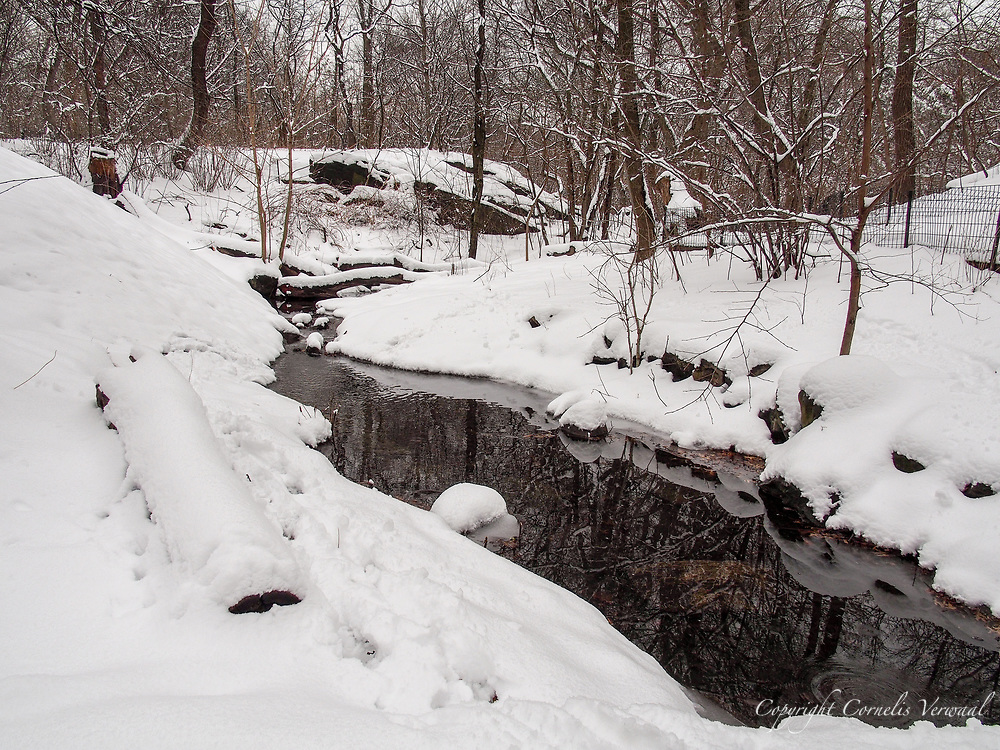 Snow in the Ramble of Central Park