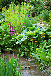 Hostas, ferns and primulas by the stream in the Upper Stream Garden at Hidcote Manor