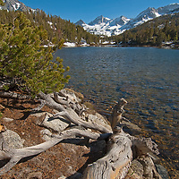 Bear Creek Spire rises behind Marsh Lake and a gnarled old whitebark pine in Little Lakes Valley at the head of Rock Creek Canyon in California's eastern Sierra Nevada.