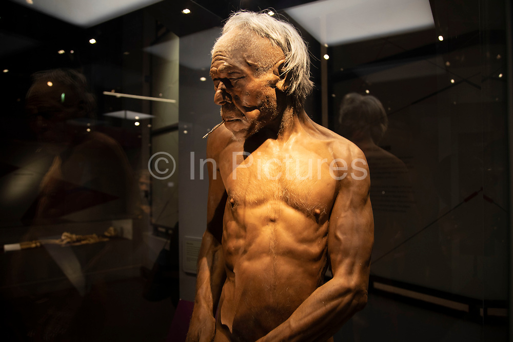 Early modern man at the human evolution exhibit at the Natural History Museum in London, England, United Kingdom. The museum exhibits a vast range of specimens from various segments of natural history. The museum is home to life and earth science specimens comprising some 80 million items within five main collections: botany, entomology, mineralogy, paleontology and zoology. The museum is a centre of research specialising in taxonomy, identification and conservation.