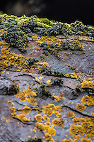 moss & lichen growth on old whaling equipment at Whalers Beach, Port Foster, Deception Island.