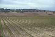Undeveloped Land In Irvine California 1984
