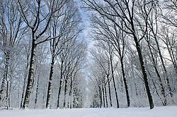 Winter, koud, cold