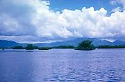 Mangrove wetland ecosystem vegetation plants, Caroni swamp, Trinidad, Trinidad and Tobago, early 1960s