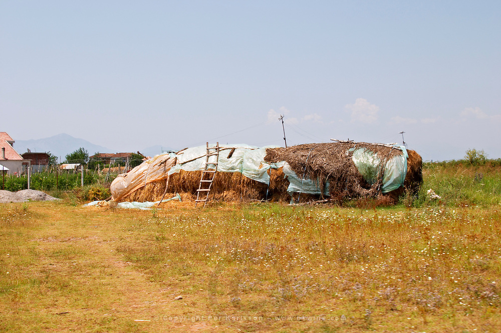 A big hay bale on the flat arid plain, covered with plastic and robes and an old ladder. Kantina Miqesia or Medaur winery, Koplik. Albania, Balkan, Europe.