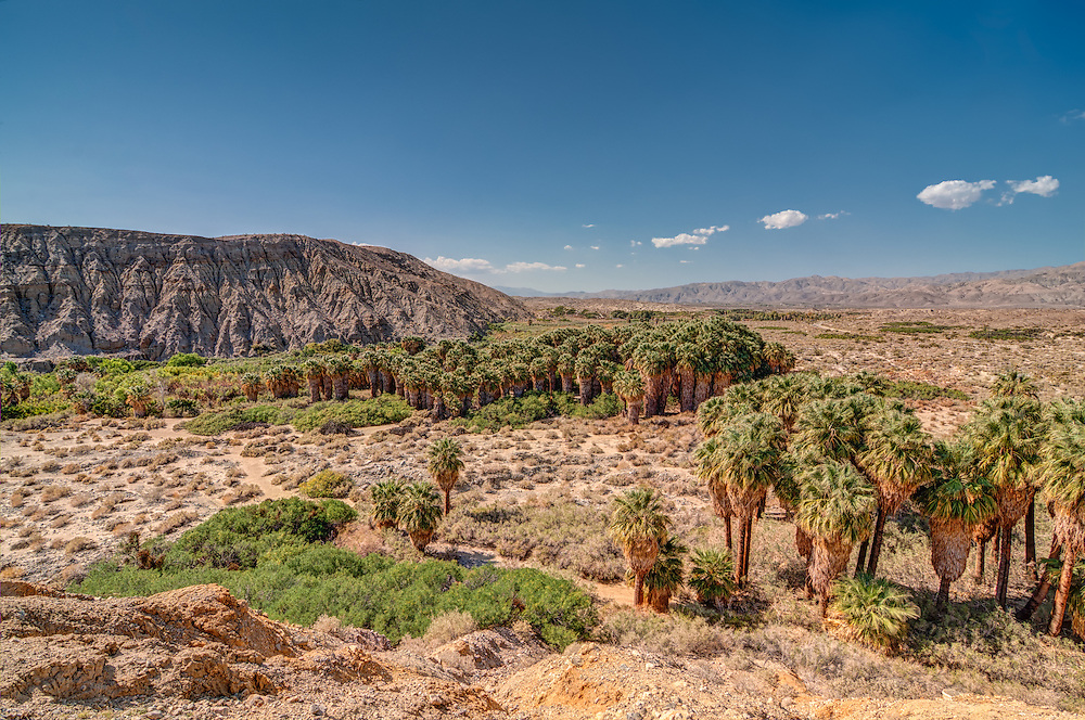 Located directly over the San Andreas Fault, this wonderful natural oasis in Southern California is an ideal habitat for many of the desert's inhabitants in search of shade, water, and the prey that come here to seek refuge.