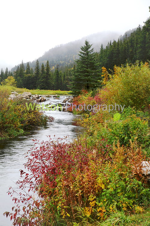Spearfish Canyon on a foggy day in Autumn
