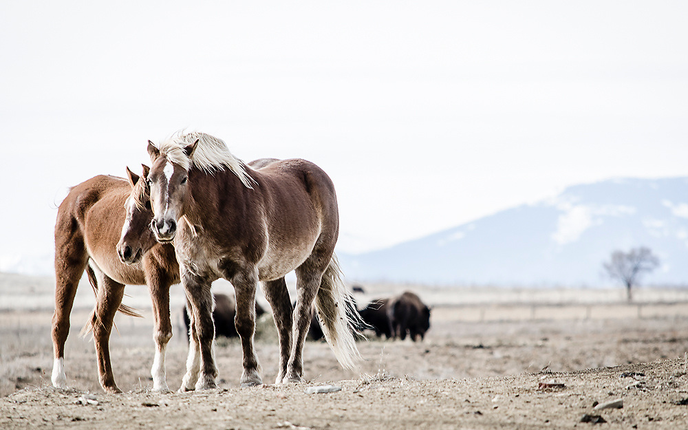 """Fine art photograph of two horses on wide prarie landscape.<br /> <br /> AVAILABLE AS:<br /> <br /> Size 20"""" x 16"""" (50.8cm x 40.6cm approx)*<br /> Edition of ONLY 100 at this size.<br /> US$350 + shipping<br /> <br /> Hand printed in Taos, New Mexico, USA by Taos Print and Photography Services using archival inks and fine art paper. signed and numbered by hand.<br /> <br /> Contact jim@jimodonnellphotography.com to order"""