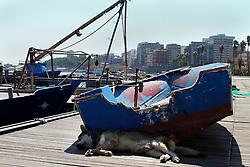 Un cane randagio si rifugia dalla canicola all'ombra di una barca.