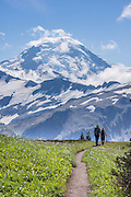 Hikers on the Skyline Divide trail admire Mount Baker (elevation 10,781 feet) in Mount Baker Wilderness, in Mount Baker-Snoqualmie National Forest, Washington, USA.