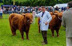 Biggar, South Lanarkshire, Scotland 23 July 2016<br /> Highland cattle in the show ring<br /> <br /> (c) Andrew Wilson | Edinburgh Elite media