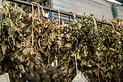 Dried herbs at Benito Juarez market in Oaxaca, Mexico.
