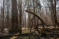 03.2015 Puszcza Bialowieska N/z pejzaz lesny fot Michal Kosc / AGENCJA WSCHOD