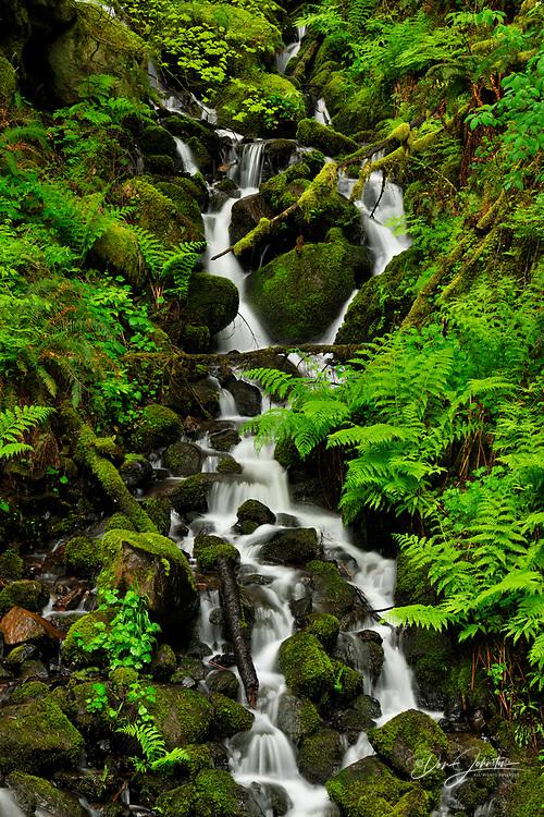 Wakeena falls- Ferns and spring vegetation near creek below the falls, Columbia Gorge Nat Scenic Area, Oregon, USA
