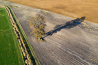 https://Duncan.co/tree-in-farmers-field