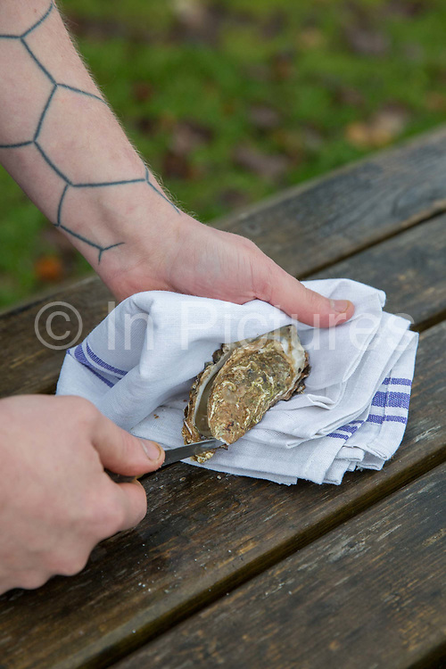 A male chef opening an oyster at the Oyster Catcher restaurant on the 3rd November 2018 in Otter Ferry in the United Kingdom